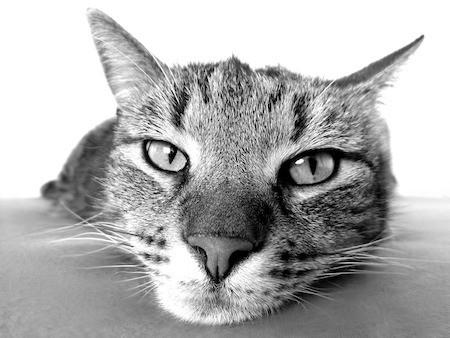 remove cat urine from concrete floor